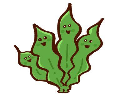 藻のイメージ