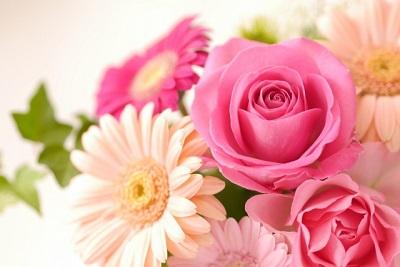 ブログ用の無料画像 ダウンロードした花